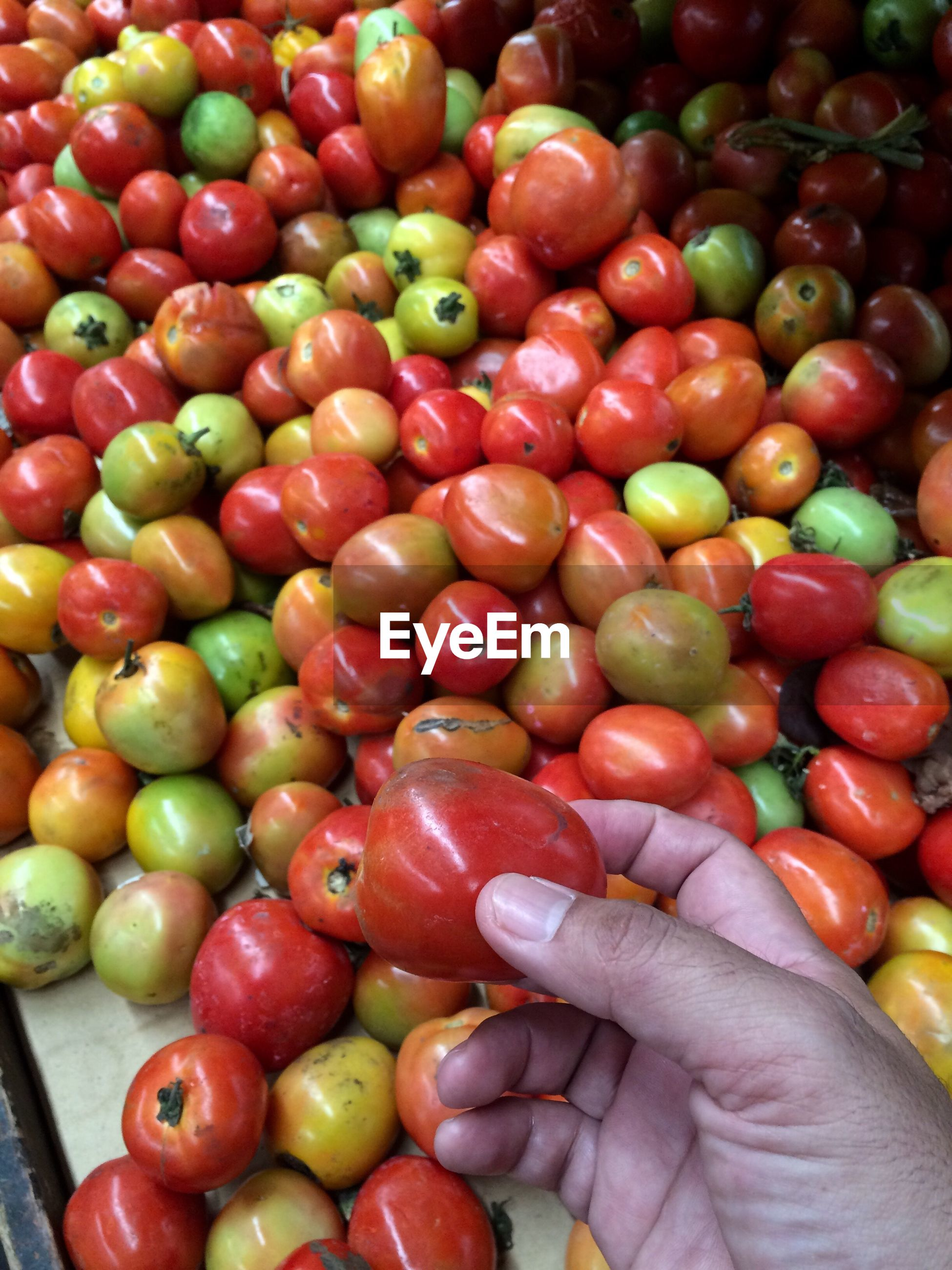 Cropped image of hand holding tomato at market stall