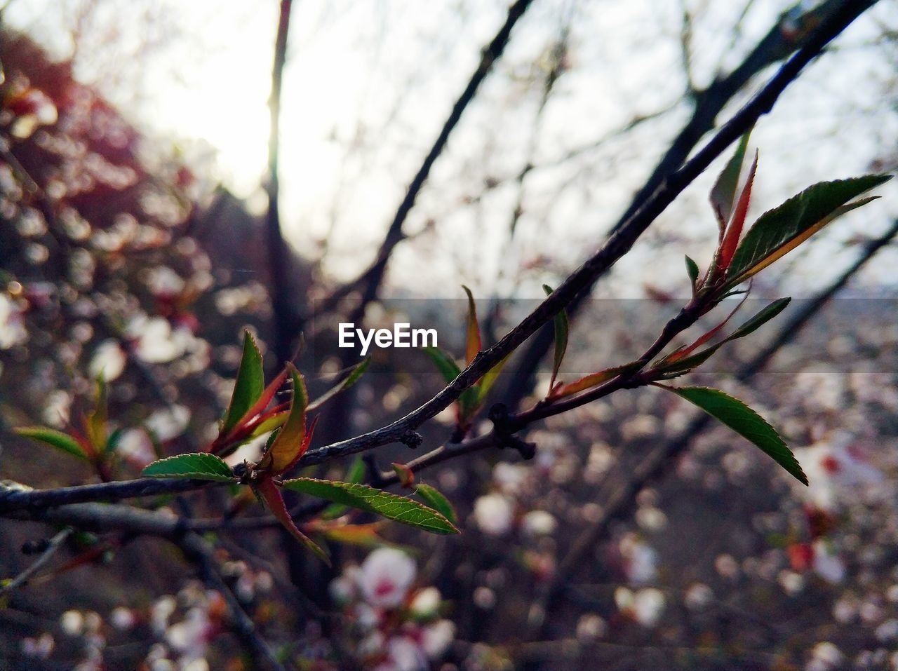 nature, growth, branch, no people, plant, day, outdoors, beauty in nature, fragility, close-up, tree, freshness, flower