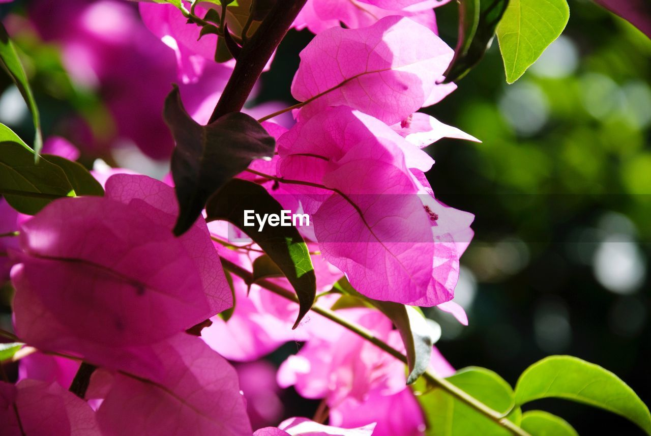 growth, flower, beauty in nature, nature, fragility, leaf, petal, outdoors, day, plant, pink color, no people, close-up, freshness, branch, tree, flower head, blooming