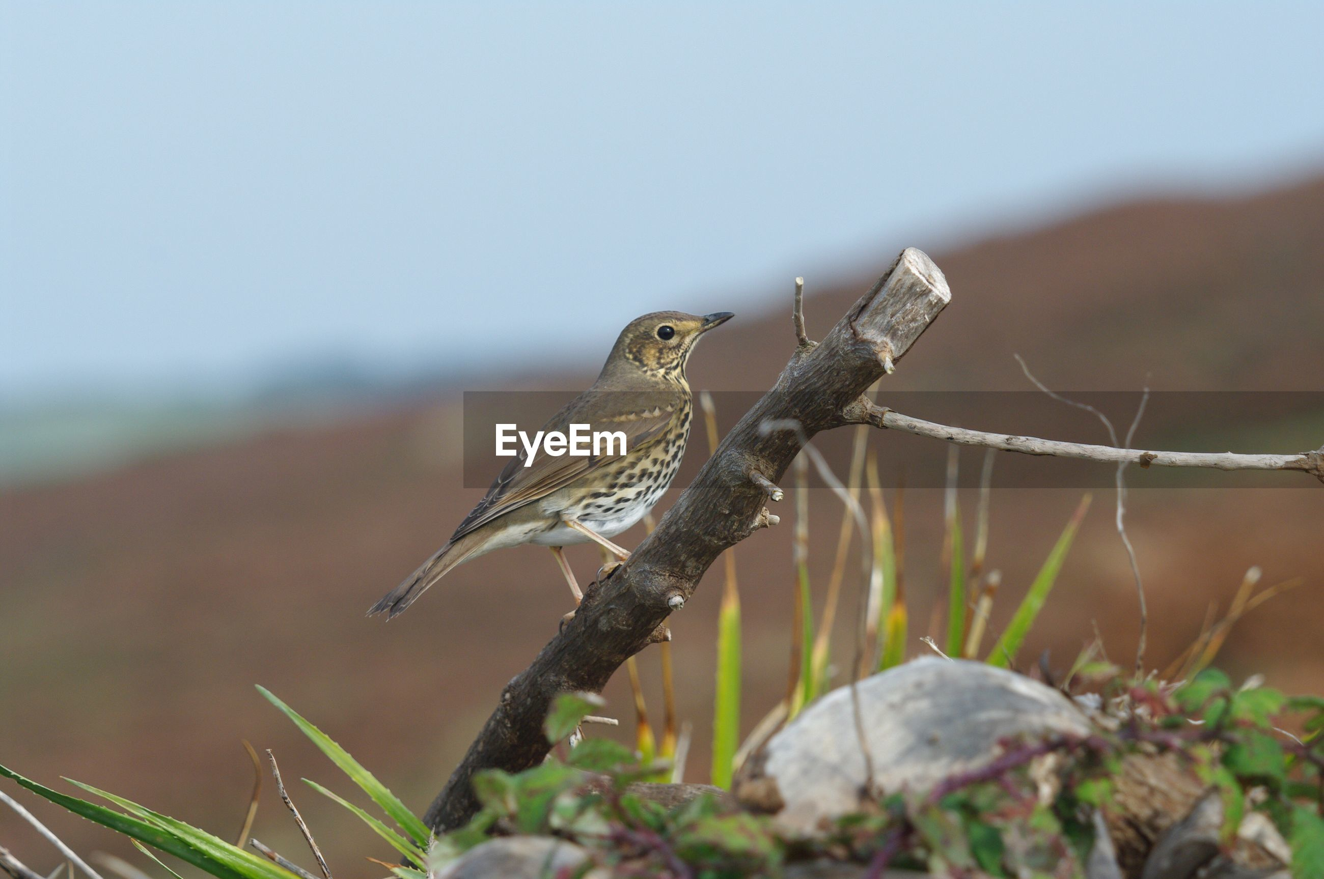 animal themes, one animal, animals in the wild, bird, wildlife, perching, focus on foreground, close-up, zoology, plant, nature, sparrow, robin, flying, animal wing, beauty in nature, no people, avian
