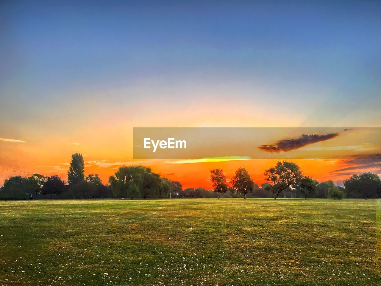 sunset, grass, field, nature, beauty in nature, tranquil scene, tranquility, landscape, orange color, scenics, tree, no people, sky, outdoors, growth, rural scene, day