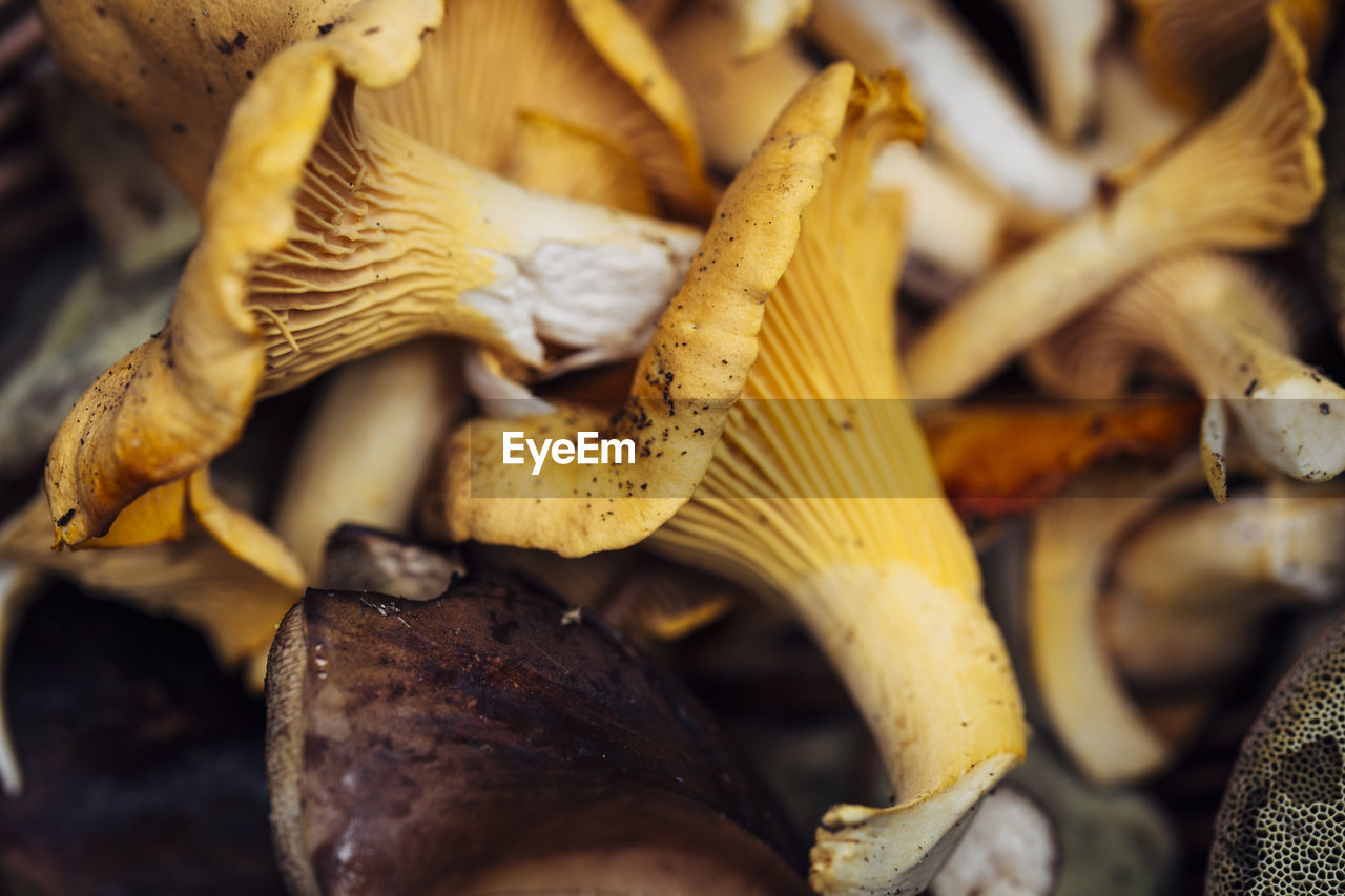close-up, no people, yellow, day, outdoors, fragility, nature, food, fungus, freshness