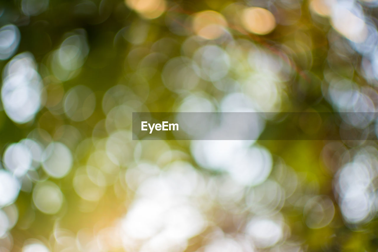 defocused, no people, backgrounds, full frame, close-up, day, lens flare, nature, selective focus, outdoors, sunlight, white color, plant, green color, pattern, illuminated, beauty in nature, tree, focus on foreground, tranquility