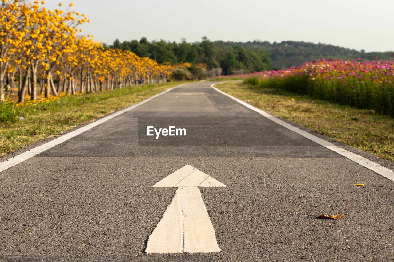 direction, the way forward, road, sign, symbol, plant, transportation, diminishing perspective, nature, marking, road marking, arrow symbol, no people, day, land, vanishing point, tree, asphalt, empty road, field, guidance, outdoors, dividing line
