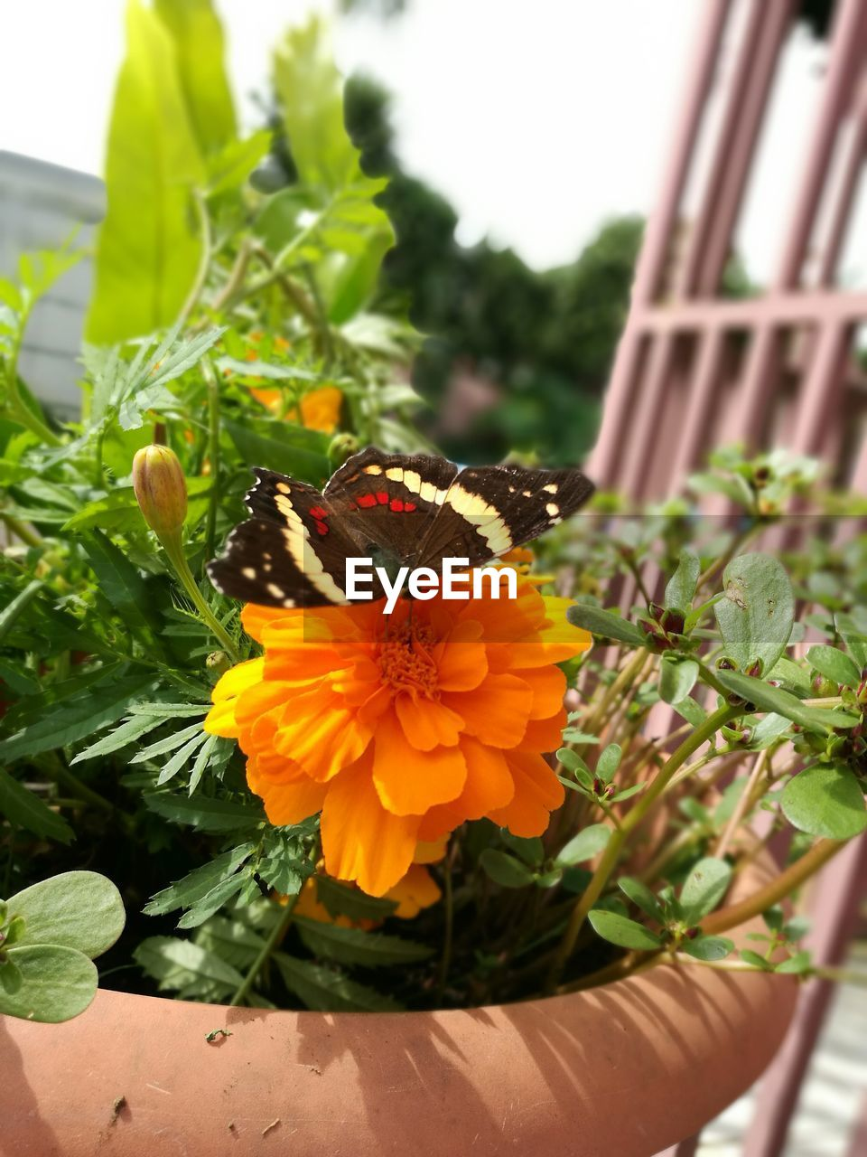 flower, plant, fragility, insect, nature, beauty in nature, freshness, close-up, growth, no people, petal, day, leaf, green color, outdoors, flower head, animals in the wild, animal themes