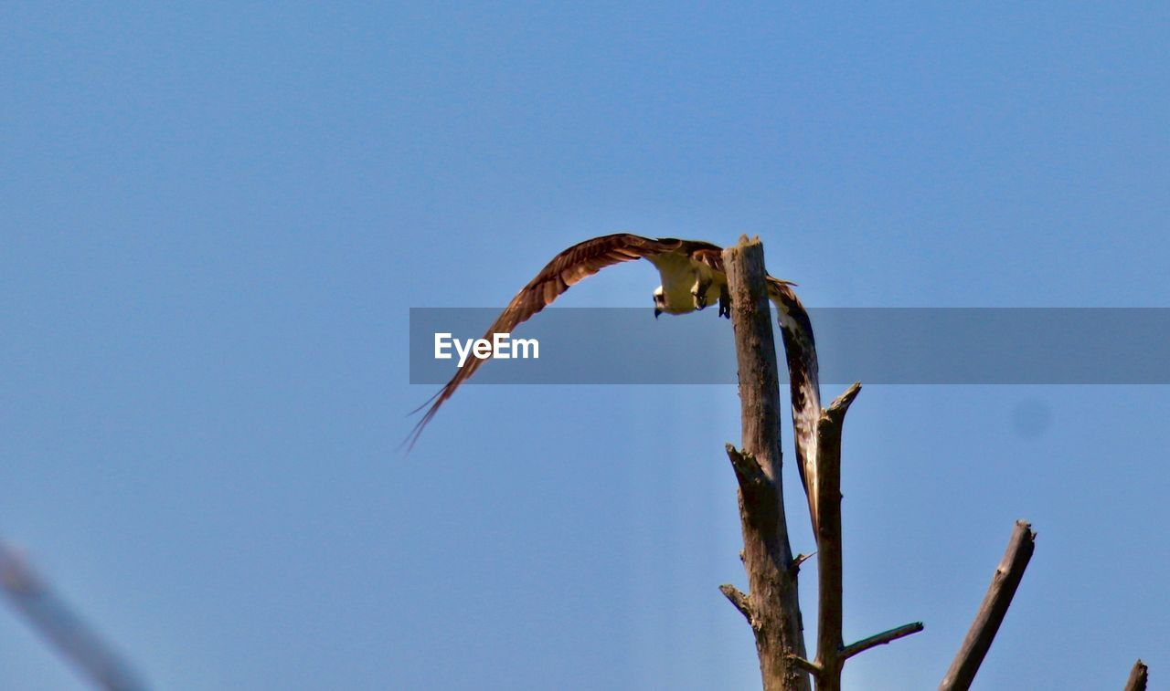 clear sky, low angle view, copy space, blue, no people, outdoors, nature, day, one animal, growth, animals in the wild, animal themes, close-up, freshness, sky