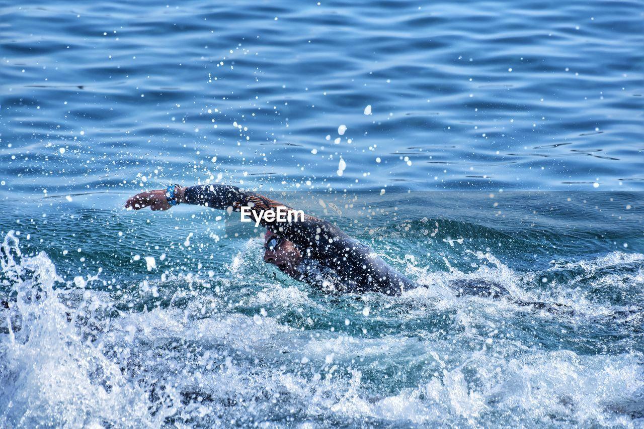 water, waterfront, sea, motion, animal, day, one animal, mammal, animal wildlife, animal themes, nature, splashing, animals in the wild, outdoors, swimming, vertebrate, beauty in nature, one person, marine