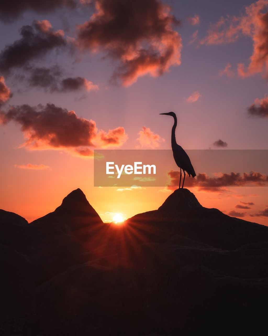 Silhouette bird perching on mountain against sky during sunset
