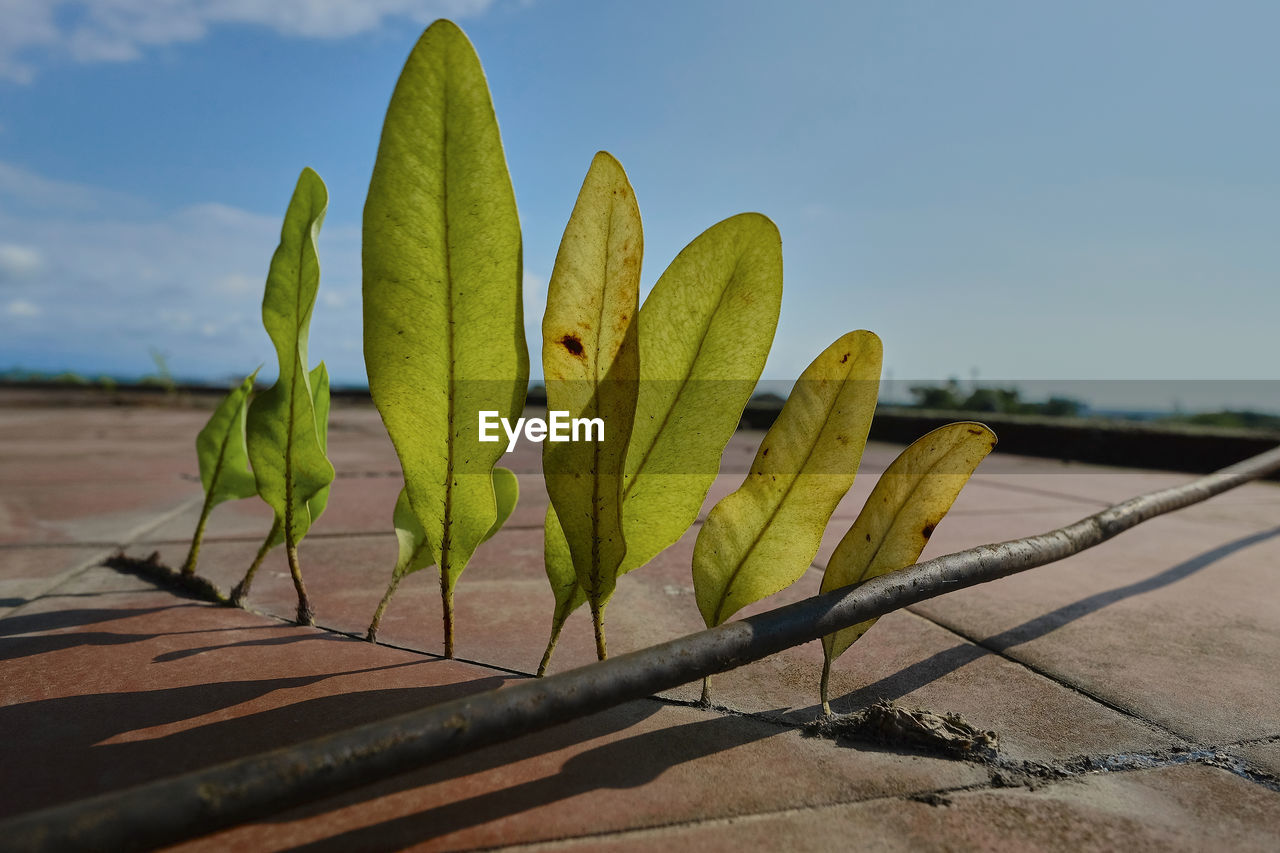 nature, plant, growth, day, no people, green color, close-up, beauty in nature, succulent plant, sky, cactus, focus on foreground, sunlight, freshness, outdoors, wood - material, land, yellow, healthy eating, sunny