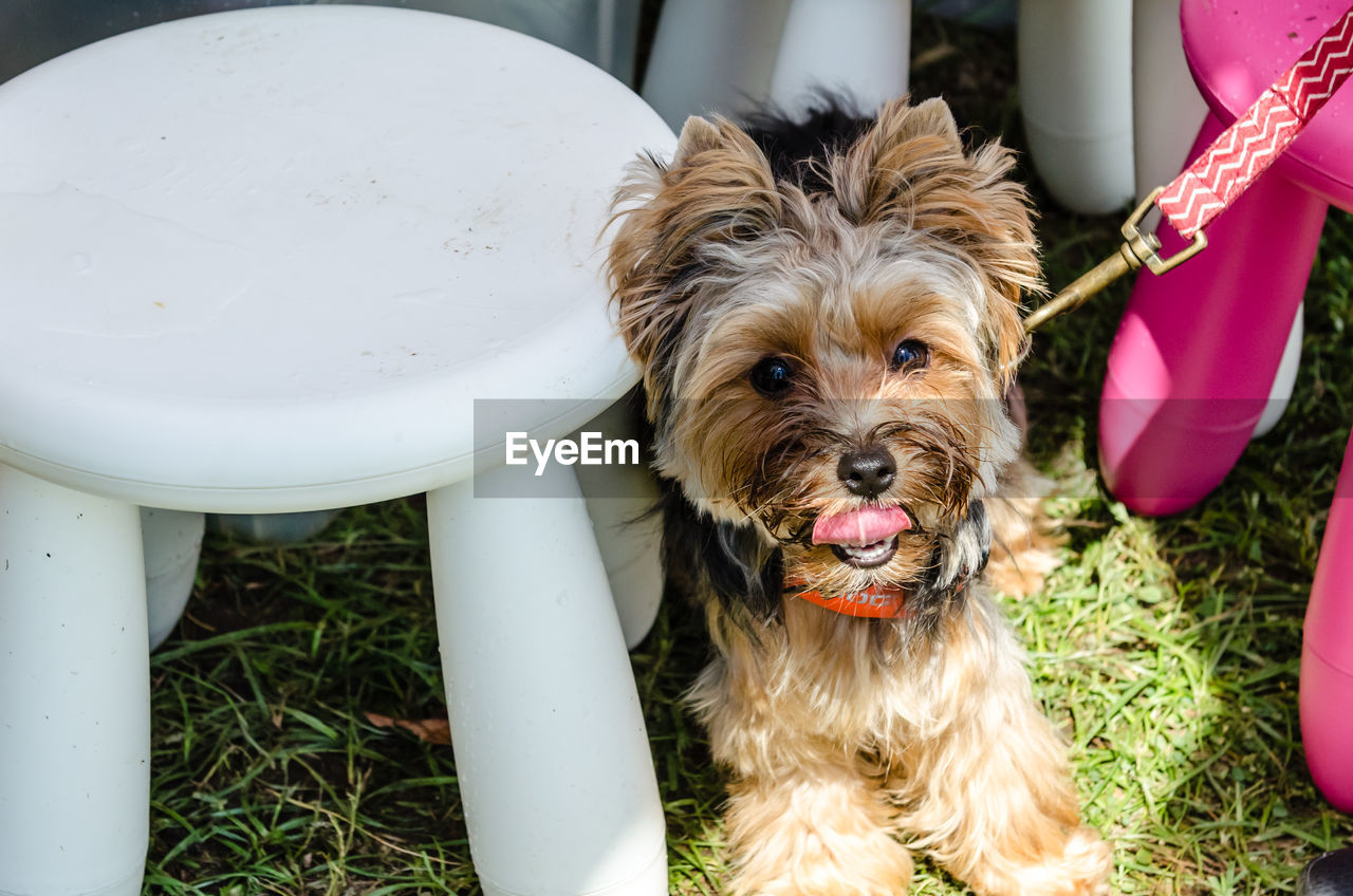 dog, pets, domestic animals, one animal, mammal, animal themes, day, no people, outdoors, close-up