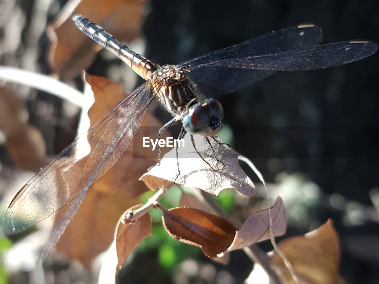 plant part, leaf, close-up, insect, animal wildlife, focus on foreground, animals in the wild, day, invertebrate, animal, nature, plant, no people, animal themes, one animal, animal wing, beauty in nature, outdoors, sunlight, selective focus, leaves