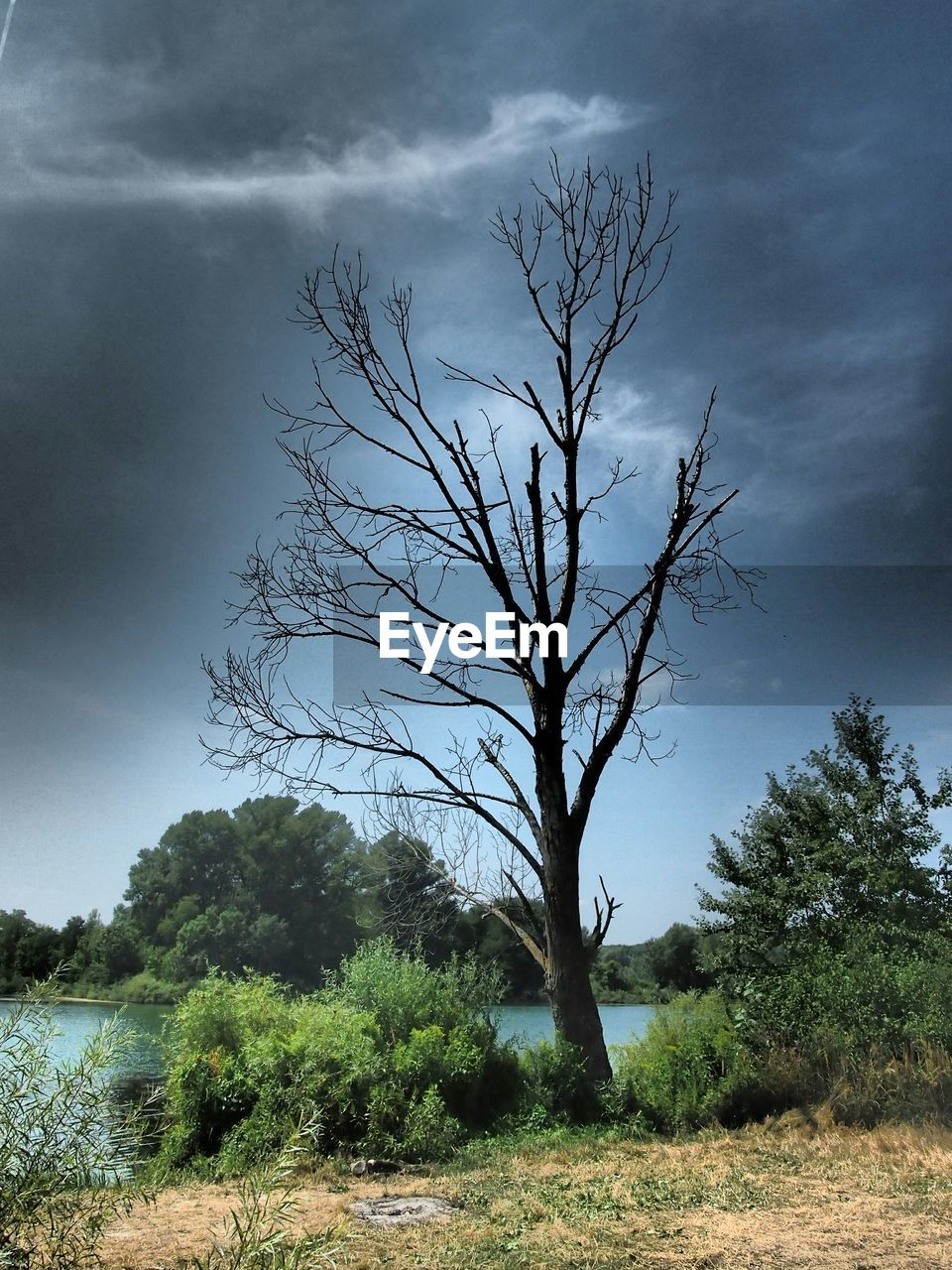 Bare tree on field by lake against cloudy sky