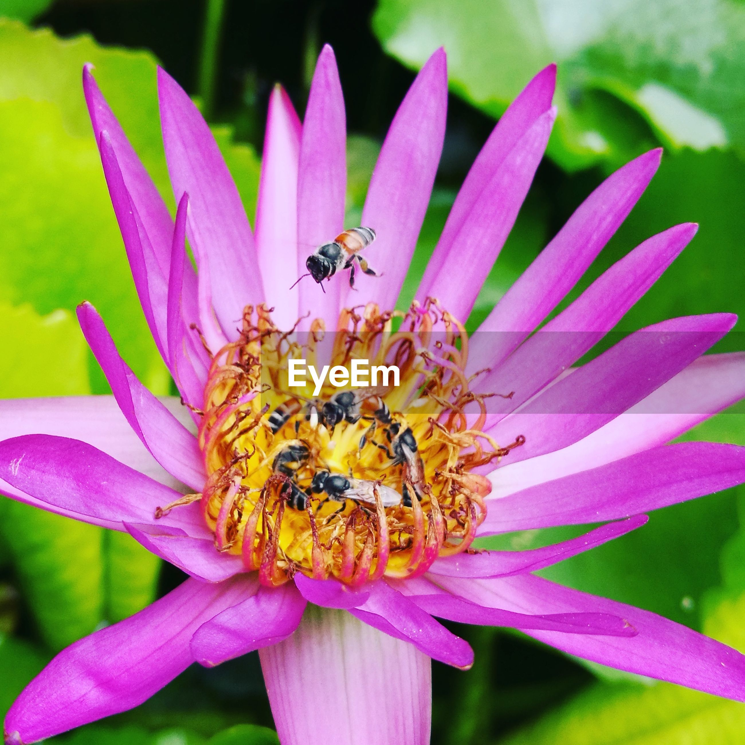 High angle view of bees pollinating on purple flower