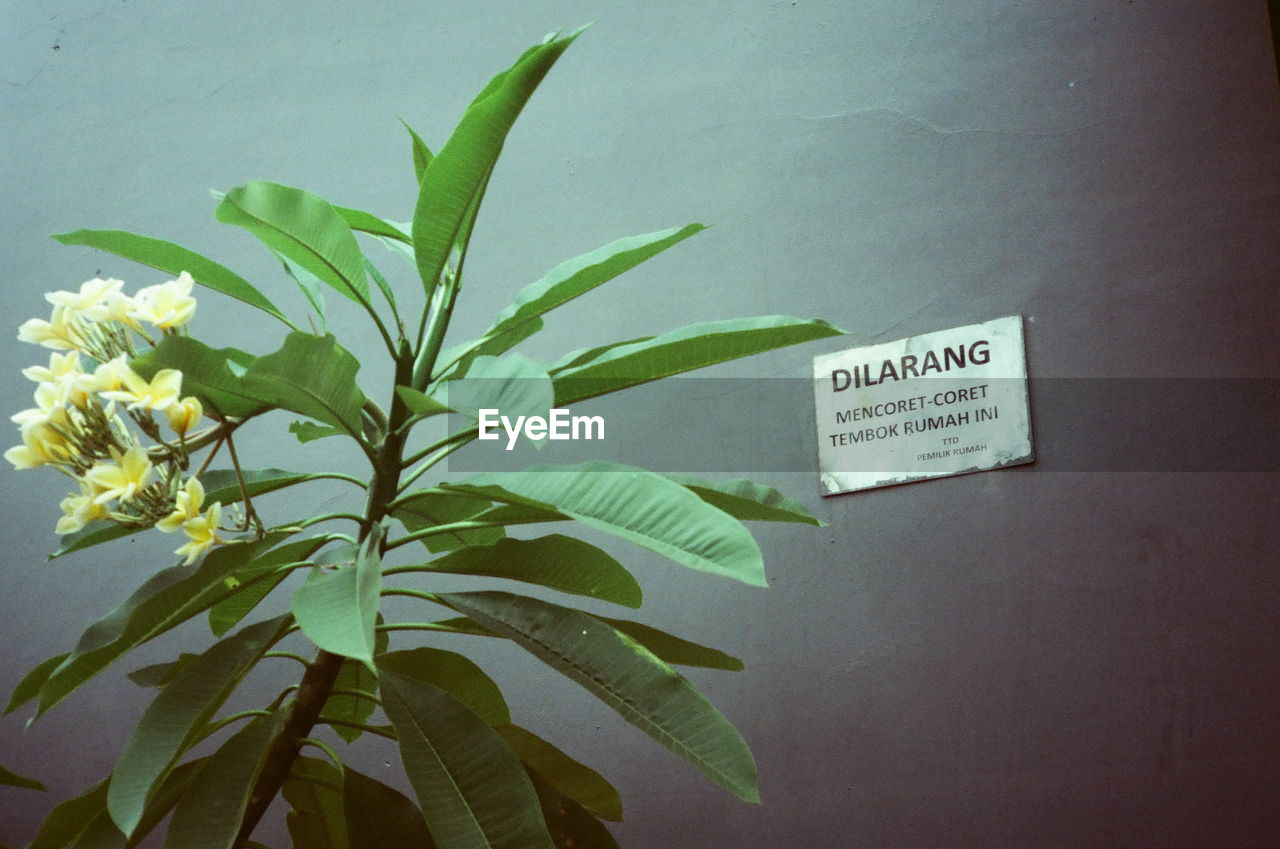 CLOSE-UP OF TEXT ON PLANT BY WALL