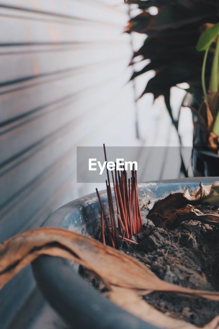 incense, nature, selective focus, plant part, leaf, close-up, no people, religion, day, spirituality, plant, burning, focus on foreground, belief, place of worship, outdoors, wood - material, burnt, growth