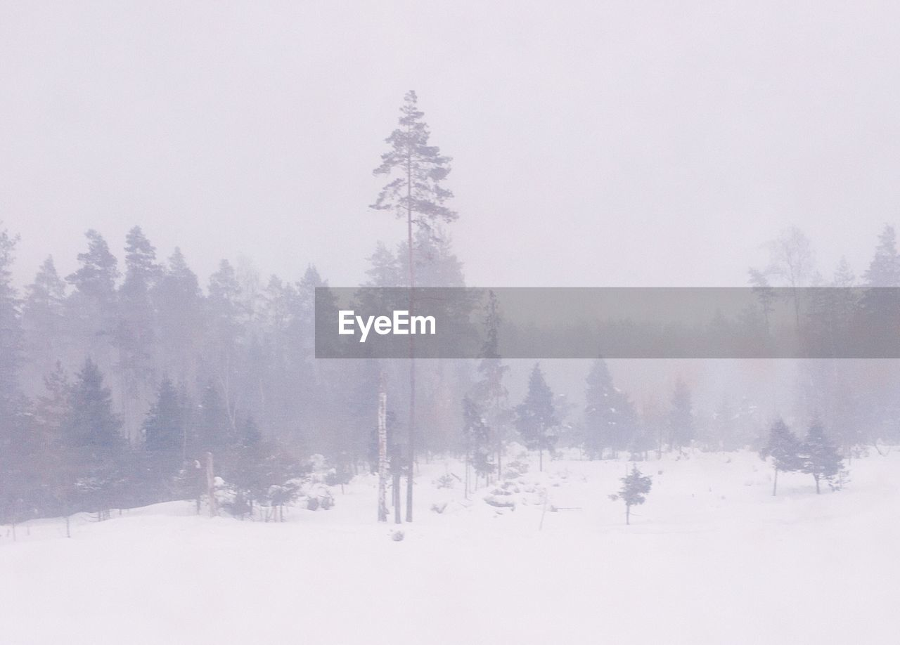 snow, winter, cold temperature, tree, fog, plant, tranquility, tranquil scene, beauty in nature, land, nature, scenics - nature, no people, non-urban scene, sky, covering, day, environment, idyllic, outdoors, snowing, climate, coniferous tree