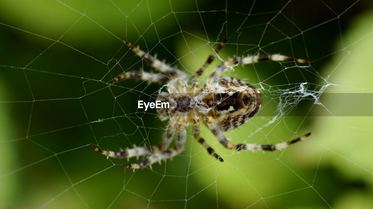 spider web, fragility, animal themes, animal, animal wildlife, animals in the wild, arachnid, spider, close-up, one animal, invertebrate, focus on foreground, arthropod, insect, no people, vulnerability, nature, day, natural pattern, zoology, outdoors, complexity, web, animal leg