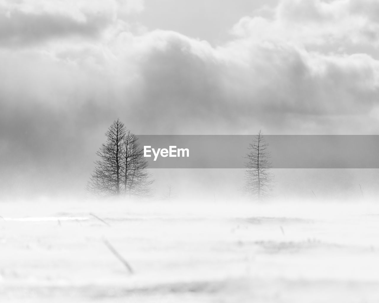 snow, winter, cold temperature, plant, cloud - sky, tree, sky, nature, beauty in nature, tranquility, tranquil scene, scenics - nature, non-urban scene, day, land, no people, environment, growth, landscape, outdoors, coniferous tree, fir tree