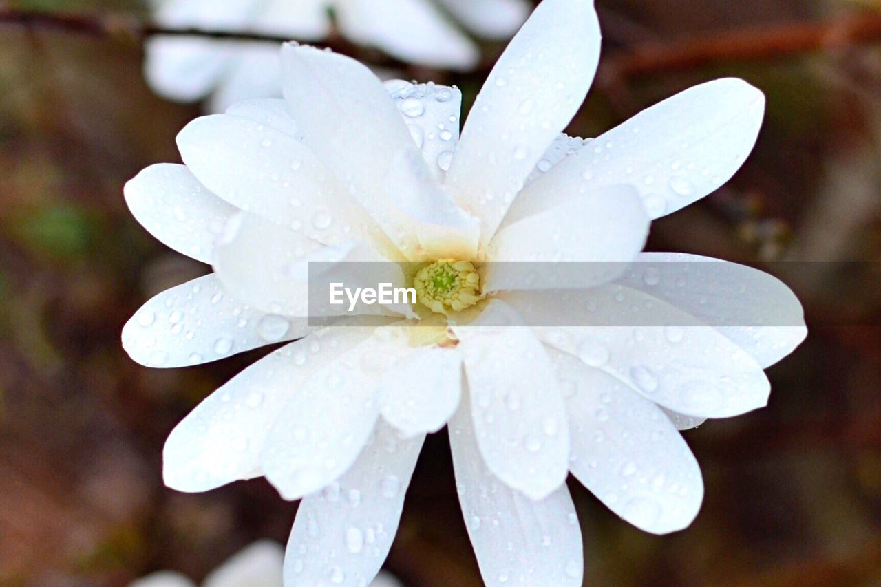 Close-Up Of Wet Flower Blooming Outdoors