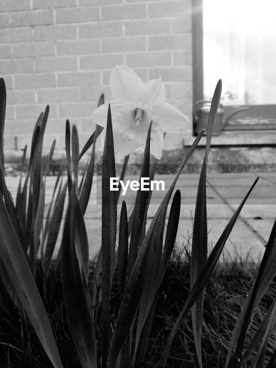 flower, growth, nature, petal, plant, beauty in nature, fragility, outdoors, flower head, day, freshness, blooming, no people, snowdrop, grass, building exterior, close-up