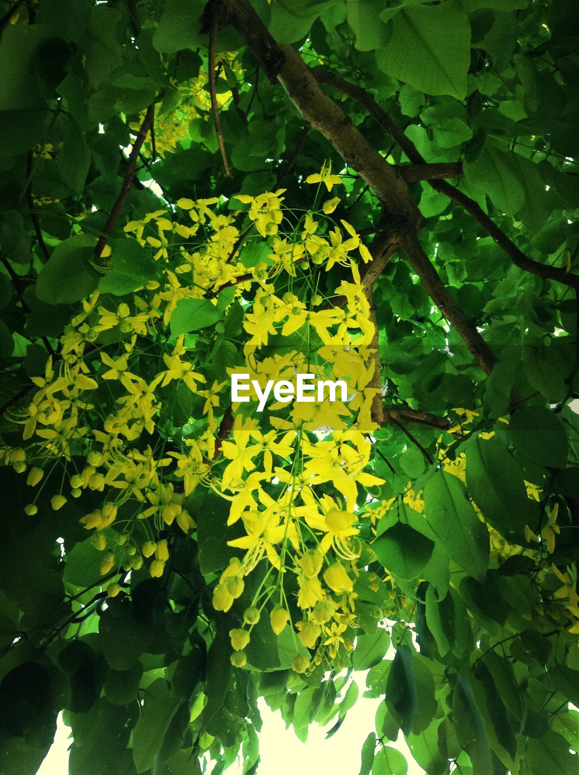 LOW ANGLE VIEW OF YELLOW FLOWERS ON TREE TRUNK
