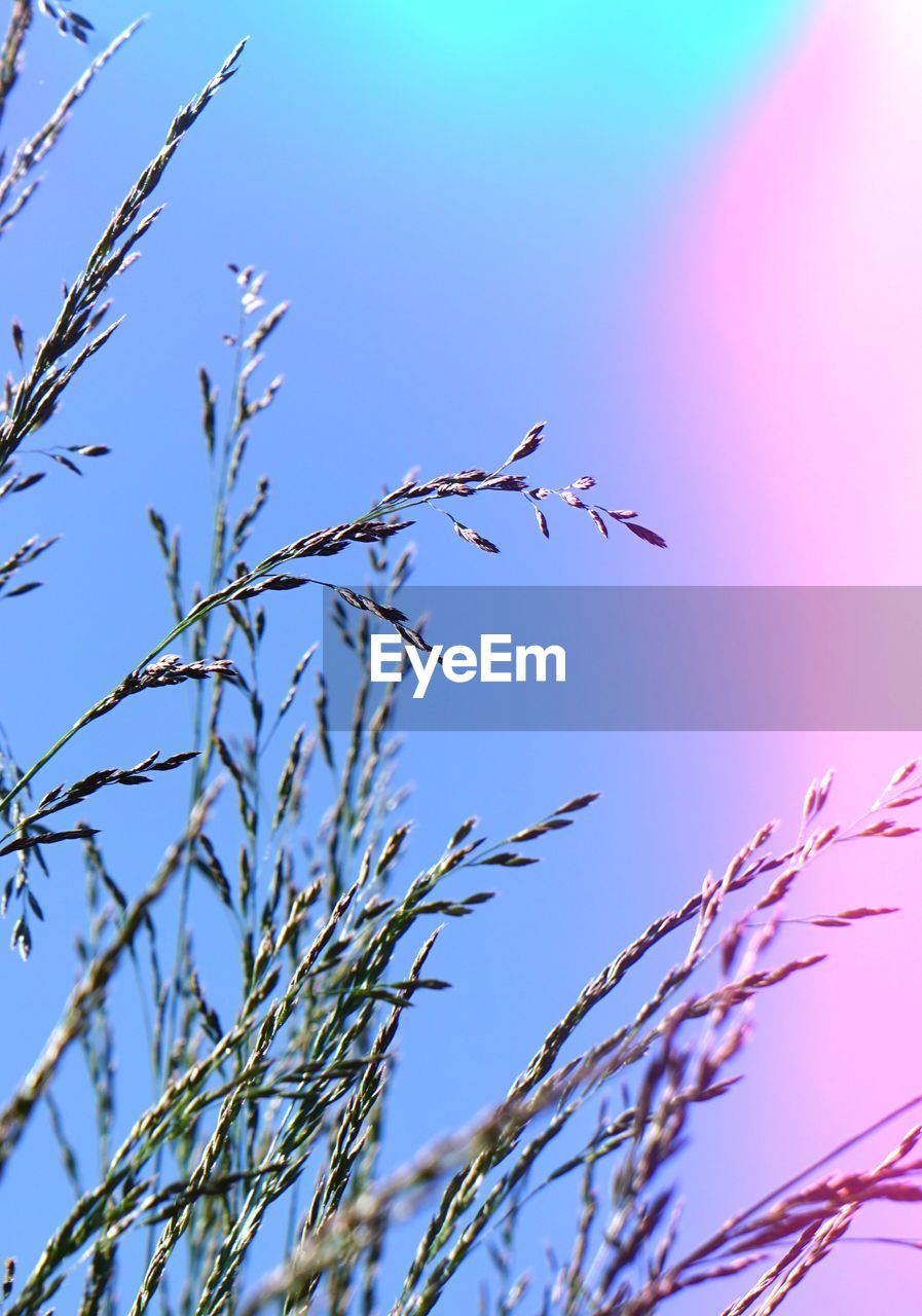 plant, sky, low angle view, growth, no people, beauty in nature, nature, day, clear sky, blue, animal wildlife, animals in the wild, bird, animal, animal themes, tree, tranquility, selective focus, vertebrate, outdoors