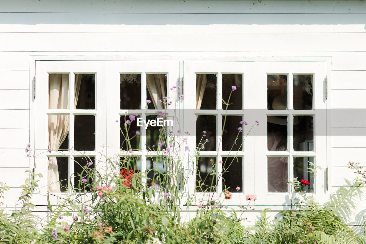 building exterior, window, architecture, built structure, building, flowering plant, flower, plant, glass - material, day, no people, outdoors, nature, house, residential district, transparent, growth, white color, reflection, entrance, window frame