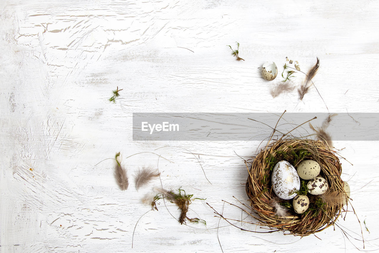 Directly Above Shot Of Eggs In Nest On Table