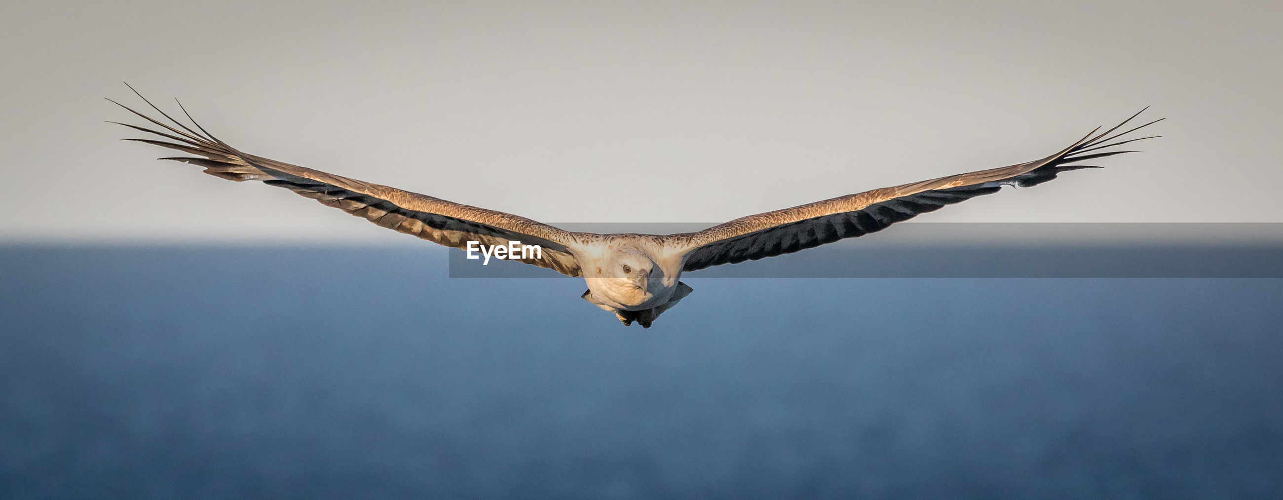 Low angle view of eagle flying over sea against clear sky