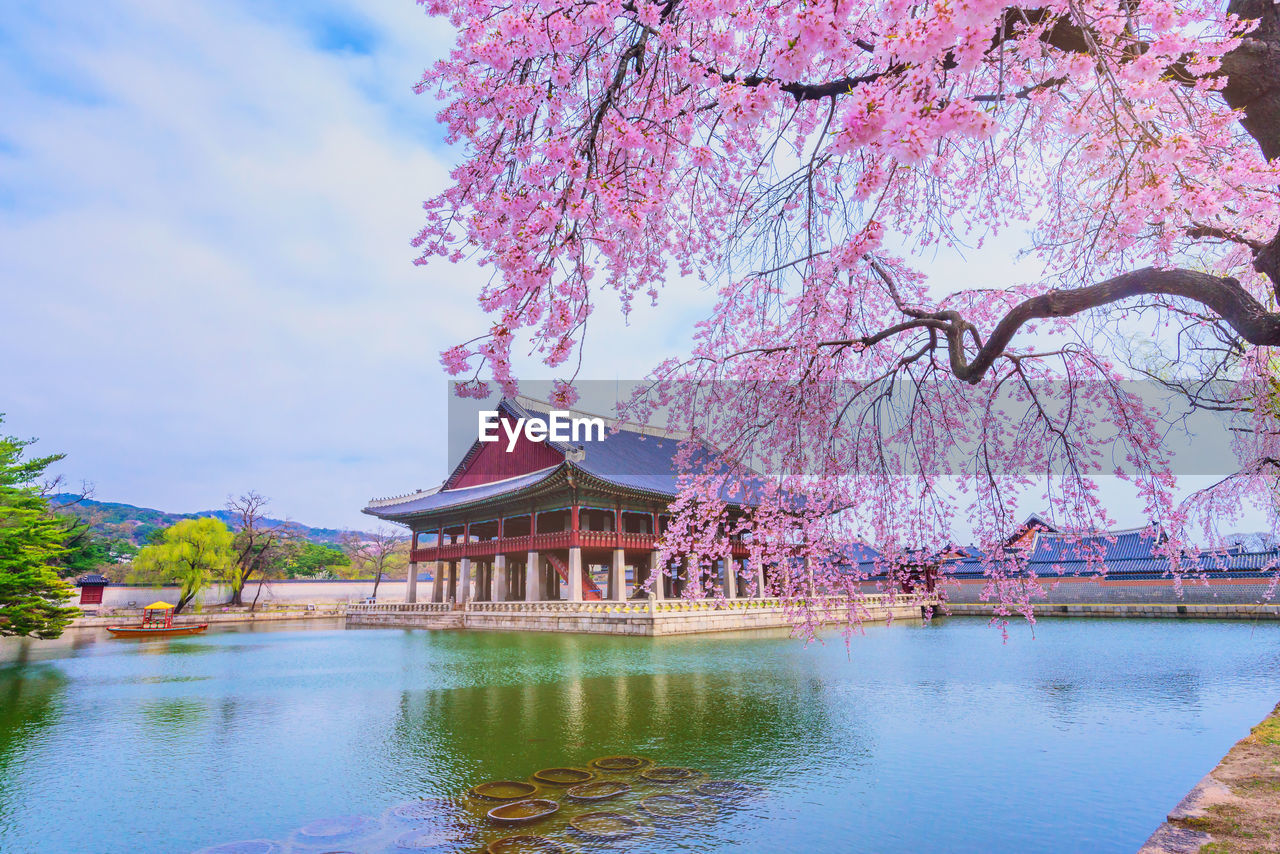 tree, plant, water, built structure, architecture, nature, building exterior, flower, lake, beauty in nature, waterfront, sky, pink color, growth, flowering plant, blossom, no people, cherry blossom, branch, springtime, outdoors, cherry tree