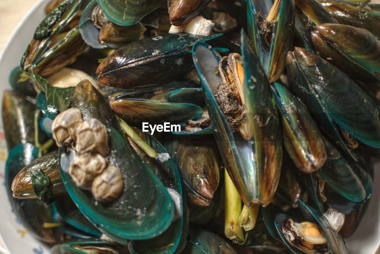 seafood, food and drink, food, freshness, animal, wellbeing, mussel, close-up, healthy eating, no people, indoors, vertebrate, fish, crustacean, high angle view, large group of objects, shell, still life, animal wildlife, abundance