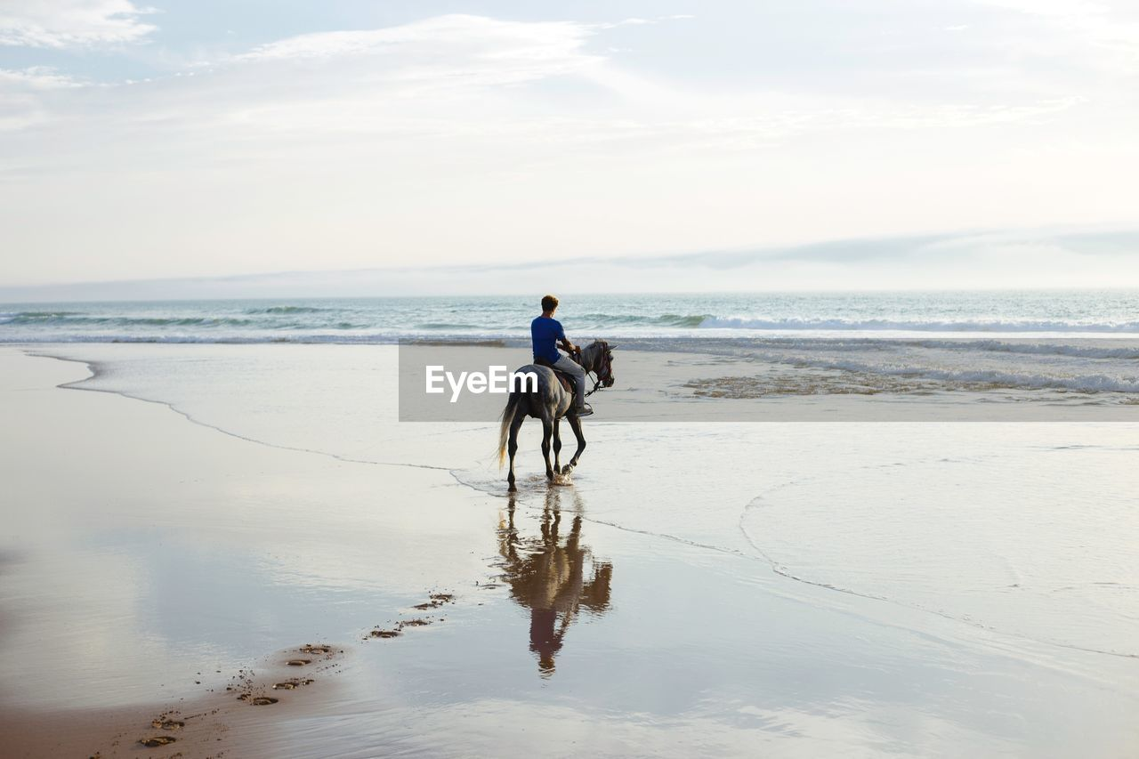 pets, domestic animals, mammal, domestic, beach, water, sea, animal themes, sky, one animal, land, animal, horizon over water, horizon, dog, real people, canine, vertebrate, beauty in nature, riding, outdoors