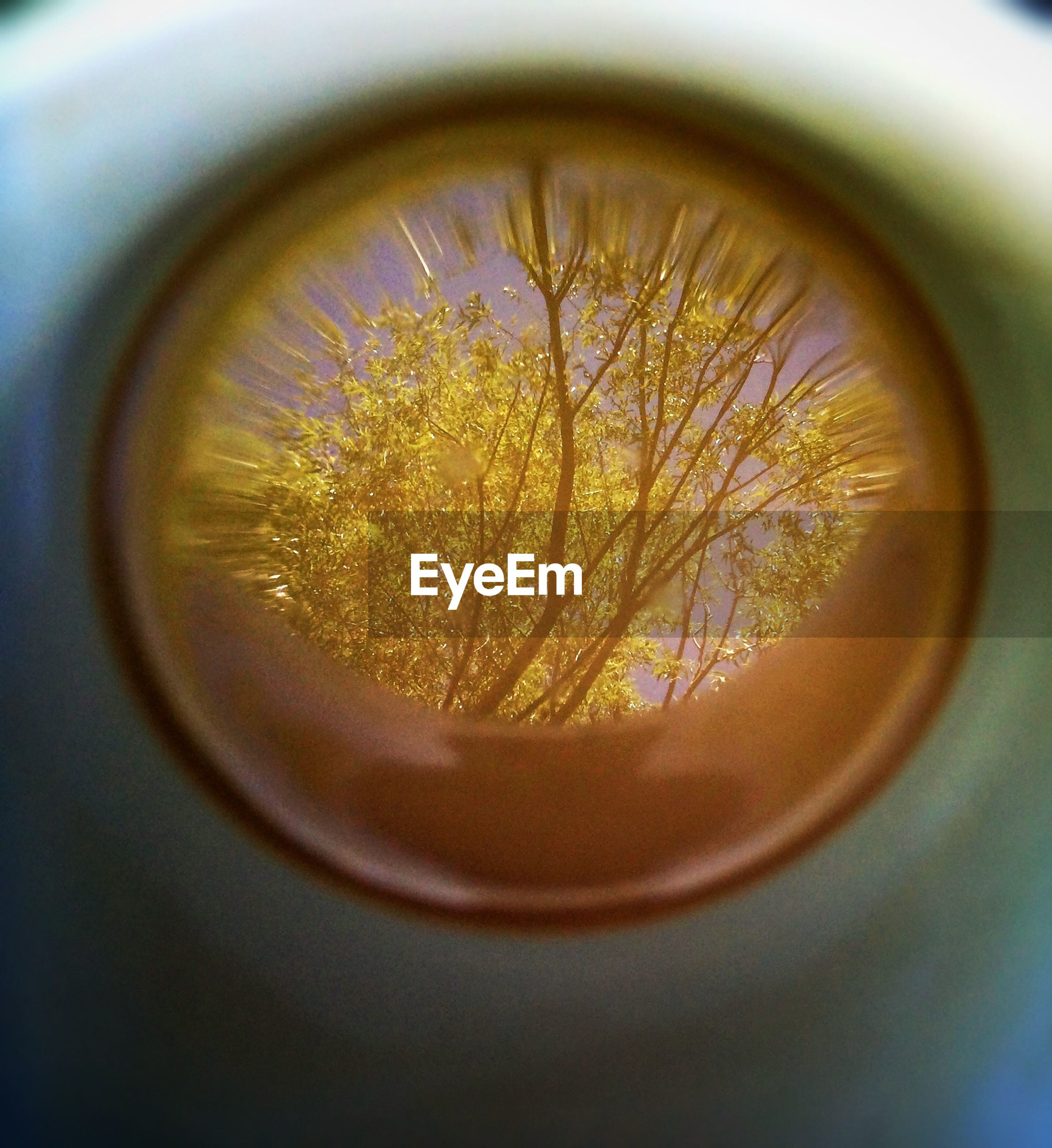 Reflection of trees in telescope