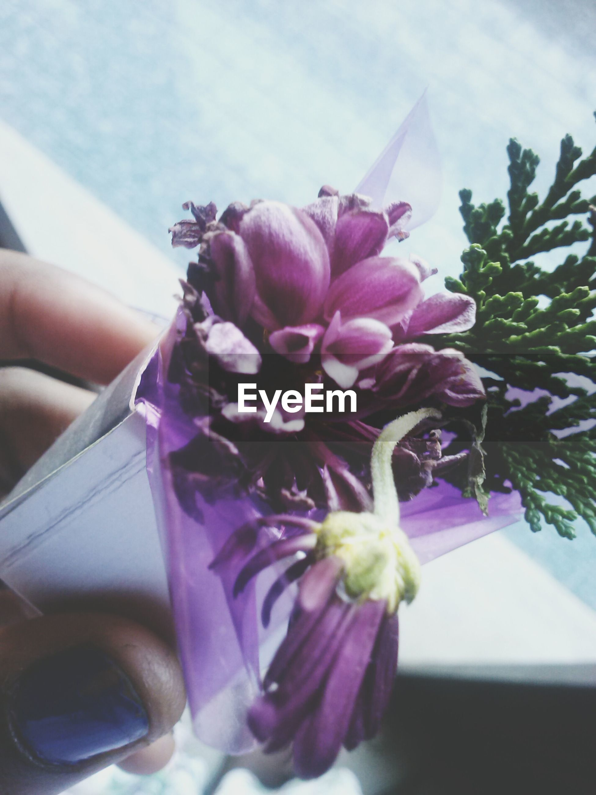 flower, freshness, petal, fragility, flower head, close-up, indoors, person, pink color, part of, focus on foreground, vase, cropped, table, beauty in nature, purple, growth, single flower, nature, plant