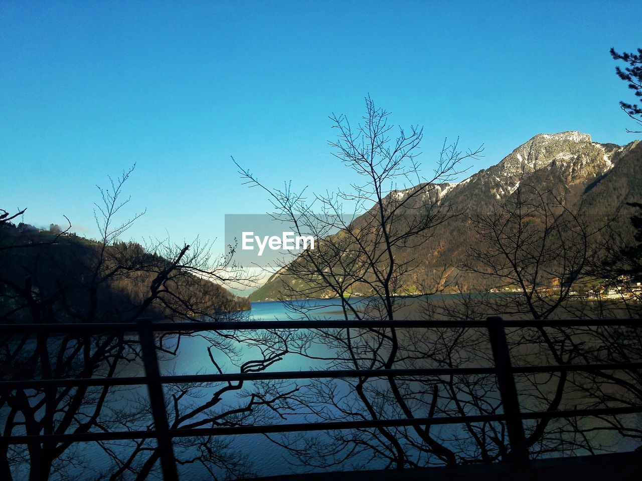 BARE TREES BY LAKE AGAINST CLEAR BLUE SKY
