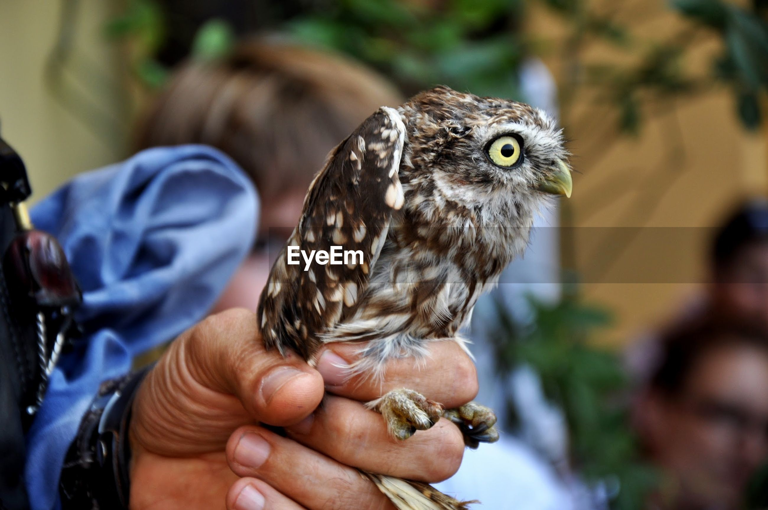 Cropped image of hand holding owl