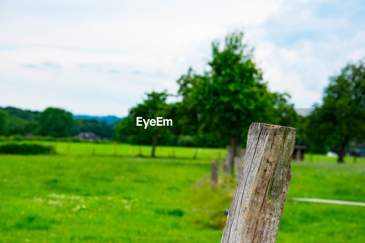 plant, wood - material, green color, fence, boundary, grass, barrier, field, tree, land, cloud - sky, sky, nature, landscape, no people, safety, protection, focus on foreground, day, post, wooden post, outdoors, bark