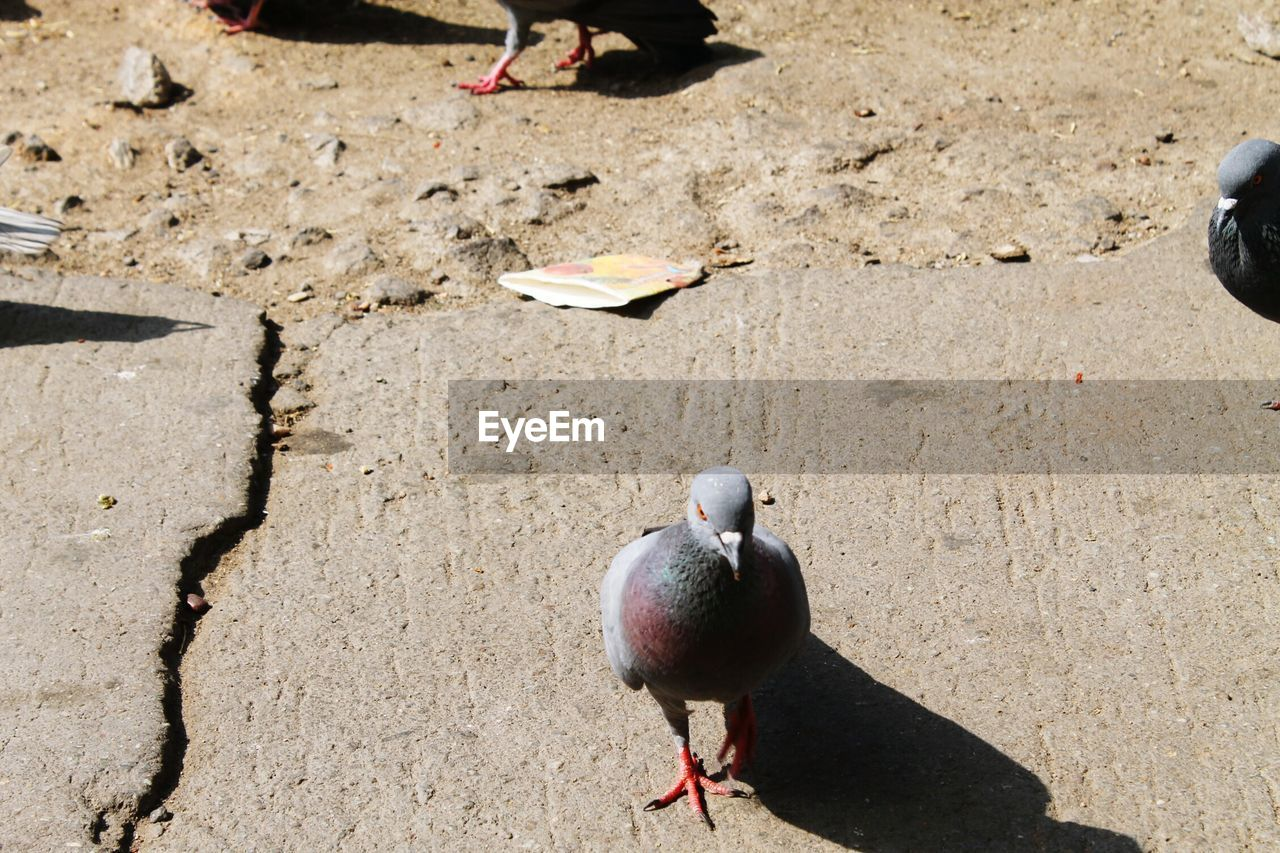 bird, sand, beach, high angle view, sunlight, animal themes, day, animals in the wild, shadow, outdoors, nature, no people