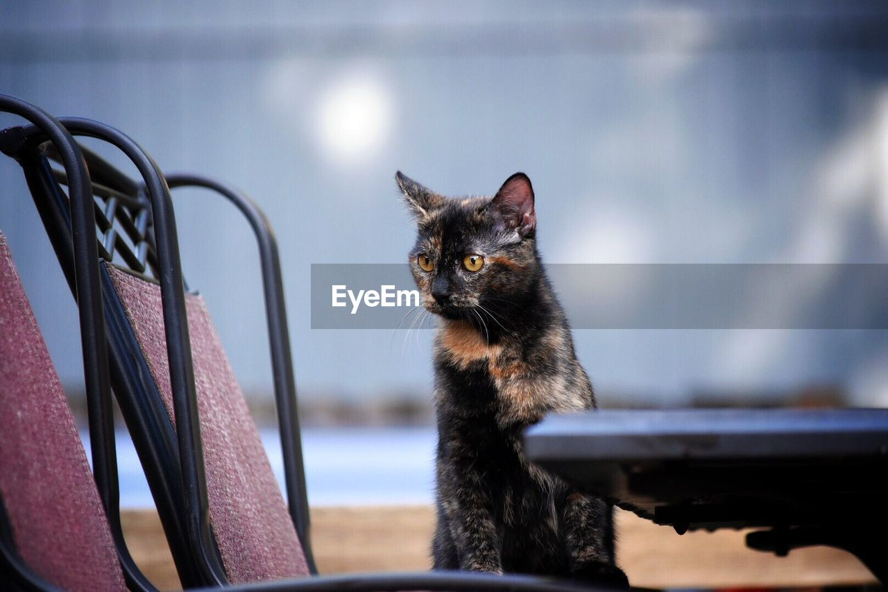 animal themes, one animal, pets, domestic, animal, domestic animals, mammal, domestic cat, cat, feline, vertebrate, focus on foreground, no people, portrait, day, whisker, indoors, looking, sitting, close-up