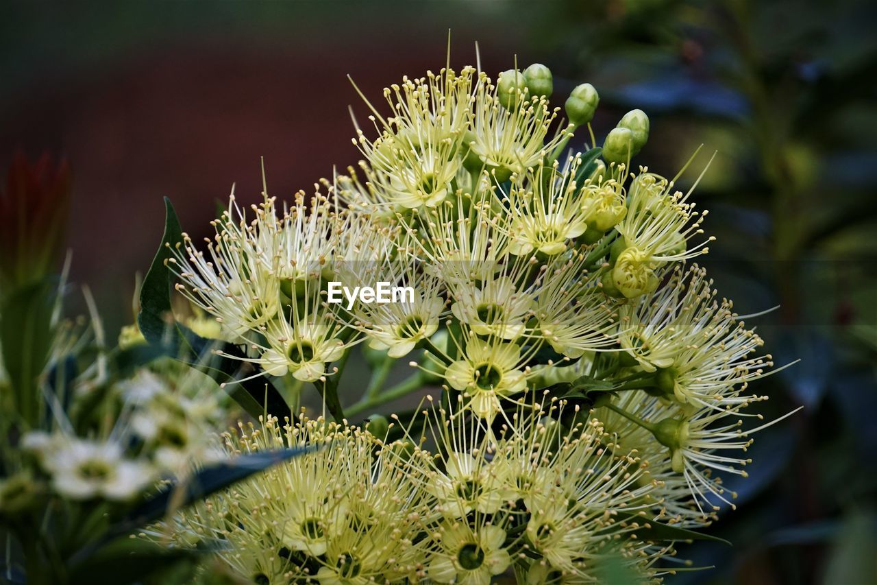 growth, plant, flower, flowering plant, beauty in nature, close-up, fragility, vulnerability, freshness, no people, focus on foreground, nature, selective focus, day, green color, inflorescence, succulent plant, outdoors, flower head, petal, spiky