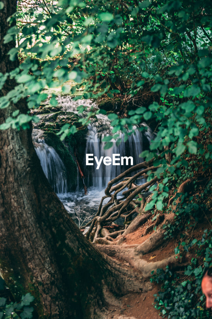tree, plant, forest, waterfall, nature, land, scenics - nature, growth, beauty in nature, motion, no people, day, water, flowing water, long exposure, green color, tranquility, environment, outdoors, rainforest, flowing