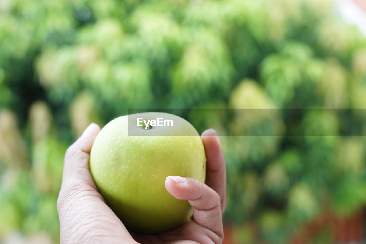 human hand, hand, healthy eating, human body part, fruit, wellbeing, holding, food and drink, food, focus on foreground, one person, real people, freshness, apple - fruit, green color, day, unrecognizable person, close-up, lifestyles, outdoors, finger, apple, human limb