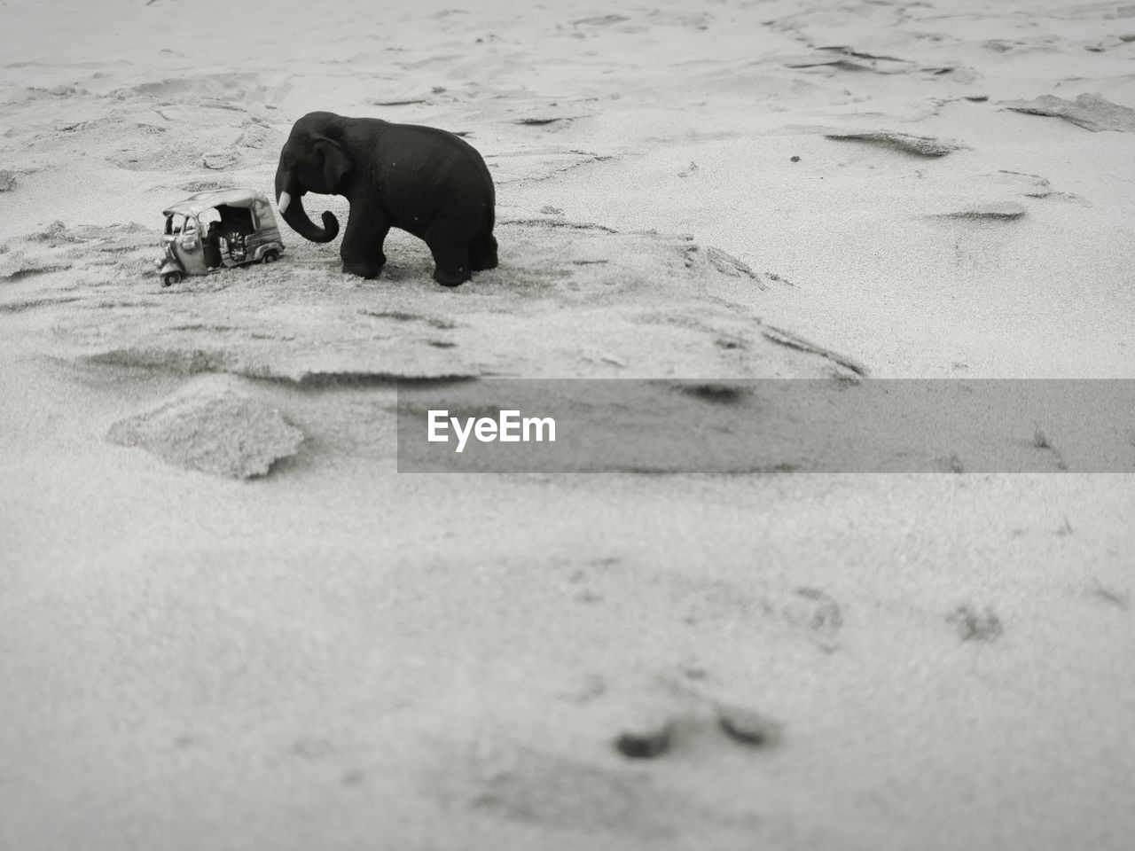 one animal, sand, animal themes, mammal, no people, beach, dog, nature, animals in the wild, day, outdoors, domestic animals, water