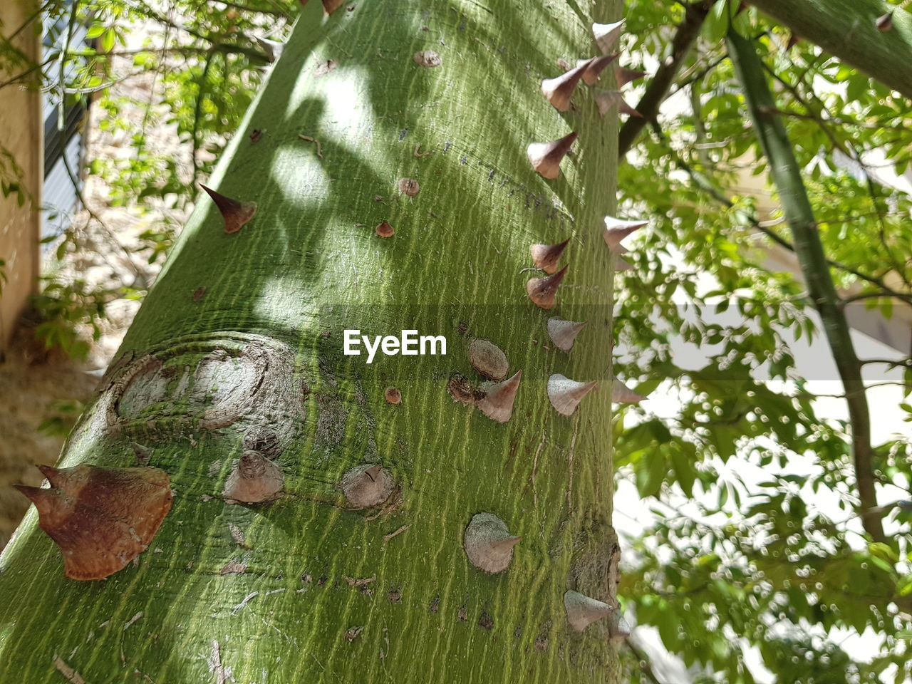 tree, plant, nature, green color, focus on foreground, day, animal themes, animal wildlife, animal, growth, invertebrate, animals in the wild, tree trunk, trunk, insect, forest, no people, close-up, outdoors, low angle view