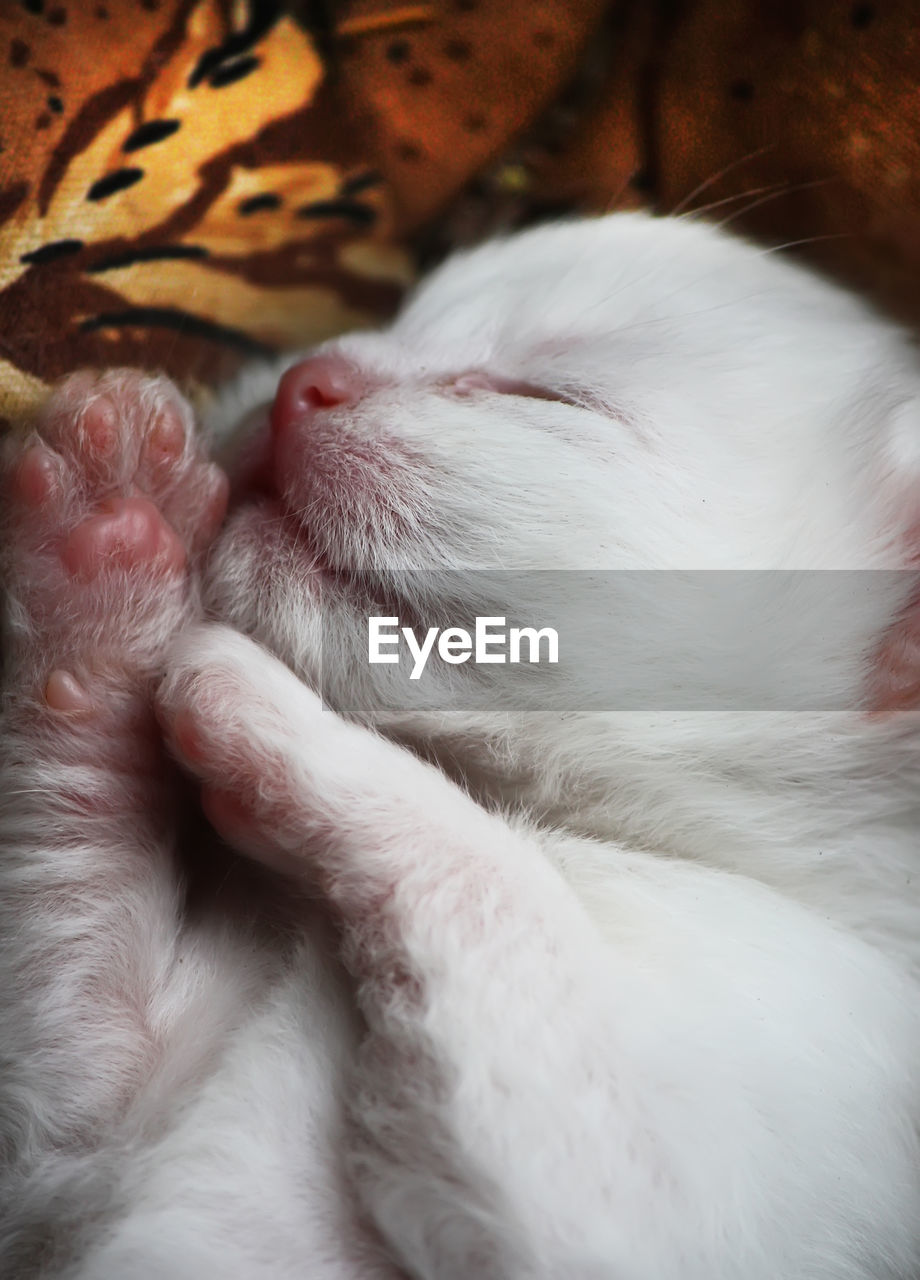 pets, domestic animals, animal themes, one animal, mammal, sleeping, white color, domestic cat, dog, close-up, feline, no people, indoors, leaf, relaxation, bed, day, nature