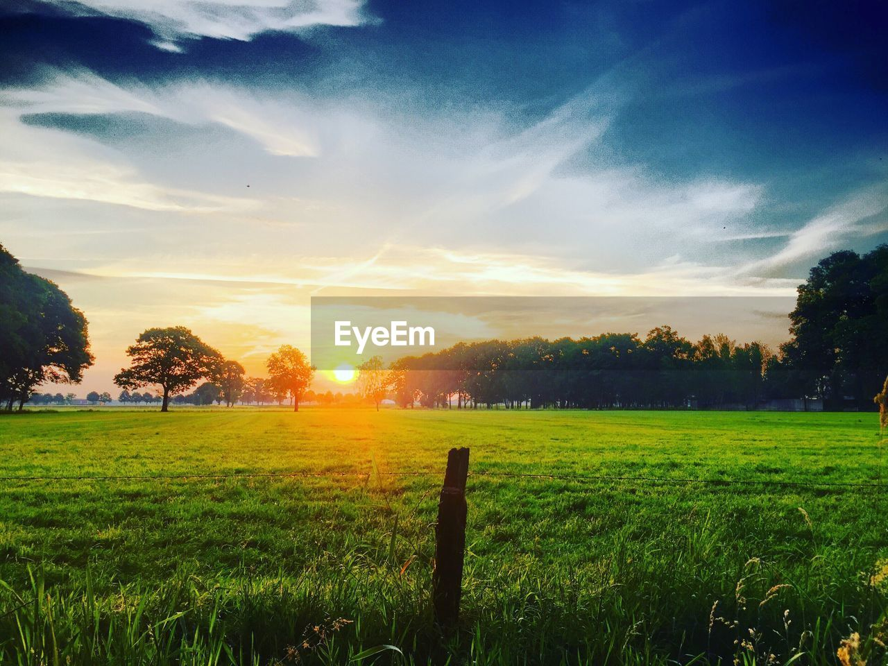 sky, tranquil scene, field, tranquility, beauty in nature, scenics - nature, plant, landscape, sunset, grass, cloud - sky, land, environment, green color, tree, nature, no people, sunlight, growth, sun, outdoors, lens flare, bright