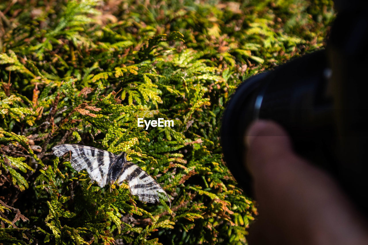 human body part, plant, one person, real people, nature, day, green color, body part, growth, lifestyles, selective focus, outdoors, close-up, human hand, leaf, beauty in nature, leisure activity, plant part, unrecognizable person, leaves