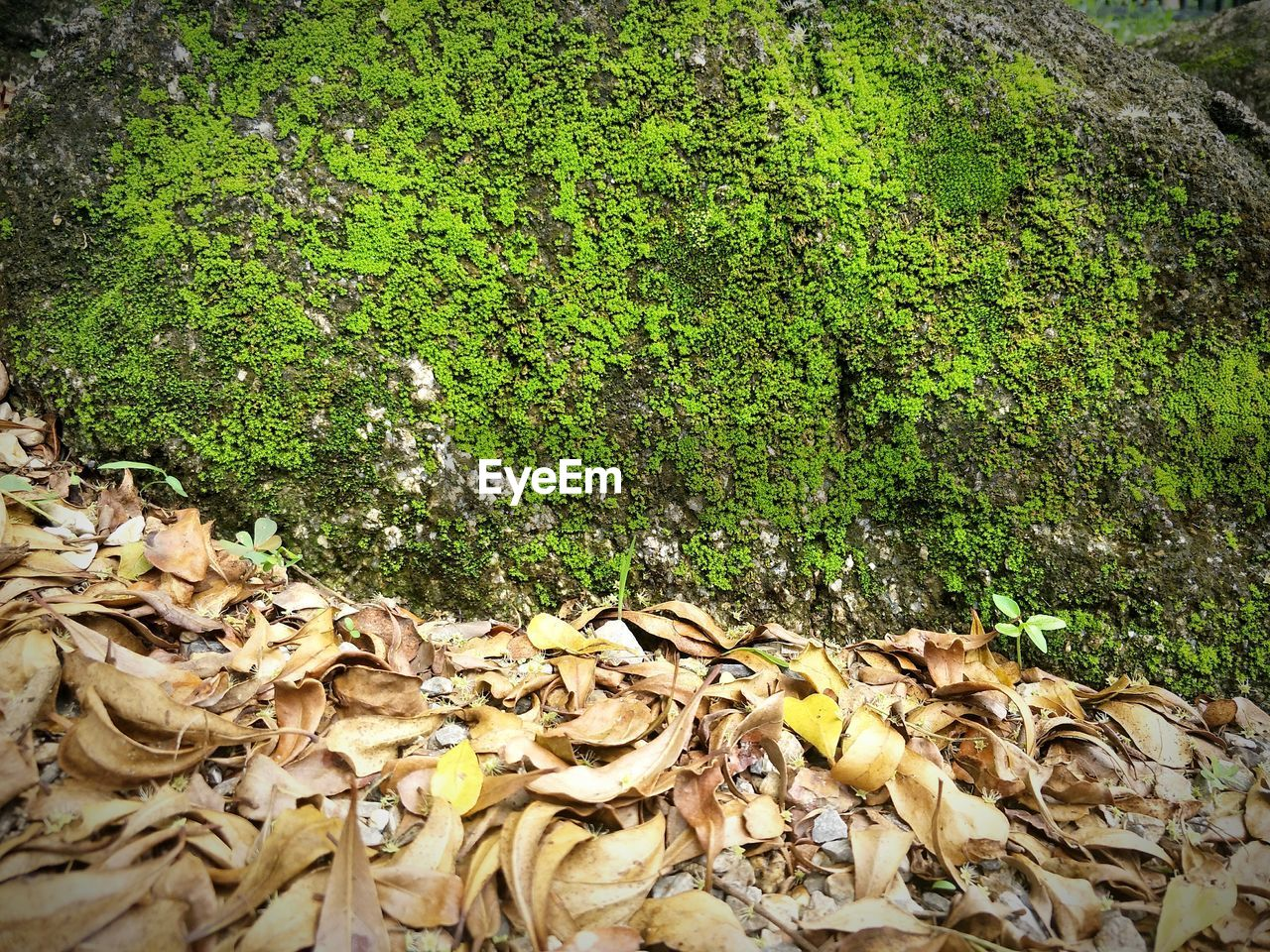 plant part, leaf, plant, autumn, nature, day, leaves, falling, no people, growth, green color, tree, land, dry, change, beauty in nature, tranquility, forest, field, abundance, outdoors, messy, natural condition