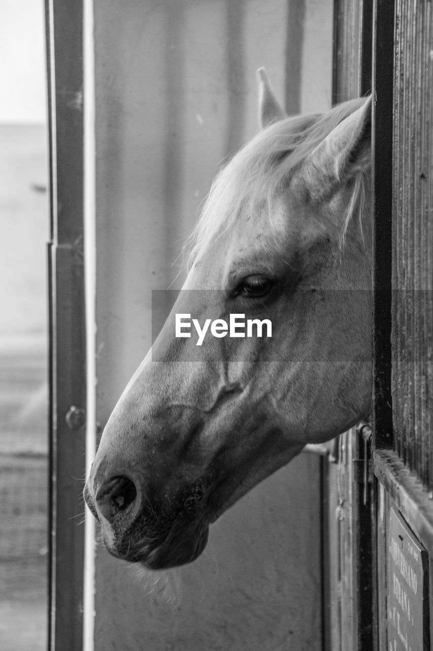 one animal, animal, animal themes, mammal, domestic animals, vertebrate, domestic, animal body part, pets, animal head, close-up, animal wildlife, no people, livestock, focus on foreground, day, horse, looking, window, barrier, outdoors, stable, herbivorous, animal eye