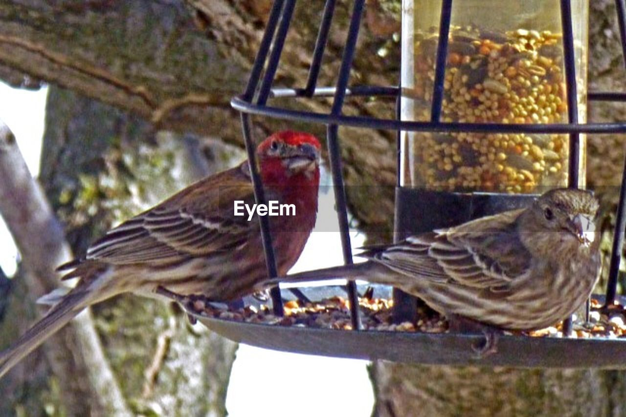 bird, animal themes, perching, no people, animals in the wild, day, animal wildlife, close-up, nature, bird feeder, outdoors, sparrow